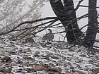 Grouse taking shelter from the storm.