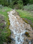 Cool stream flowing into Wilson Creek at about 7300'.