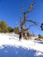 Sean passing by an old snag.