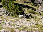 Mountain goat on the southwest slopes of the third peak.
