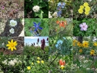 Samples of the numerous wildflowers we saw.