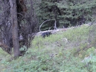 Black bear near the trail about a mile from the trailhead.
