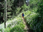 Hiking through Lupine and Aspen.