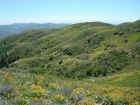 Lots of Arrowleaf Balsamroot flowers on the hillsides this year. Three Point and Kepros Mountains in the upper left.