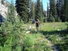 Hiking through a wildflower filled meadow along upper Scenic Creek.