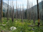 The view back into the upper Johnson Creek drainage from the burn area.