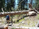 Giant Ponderosa that had fallen across the trail, a mile or so from the trailhead.