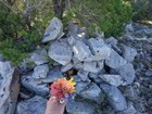 Summit cairn and wildflower bouquet for my wife.
