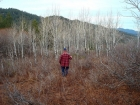 Dad entering an Aspen grove on the way back down.