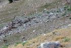 Sheep in Bighorn Basin. There's a ram and ewe in the lower left, with several other ewes and lambs scampering away in the upper right.