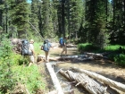 Bill, JJ, and Ken at a log crossing of Redfish Lake Creek during our bushwhack.