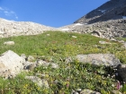 Lots of wildflowers as we climb the to saddle on the south ridge of Fremont Peak.